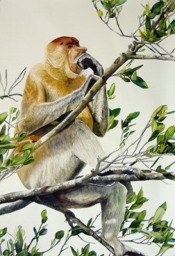 Clément Collet-Billon, To ape : Orang Belanda = Dutchman, watercolors on paper, 110x75cm, 2009