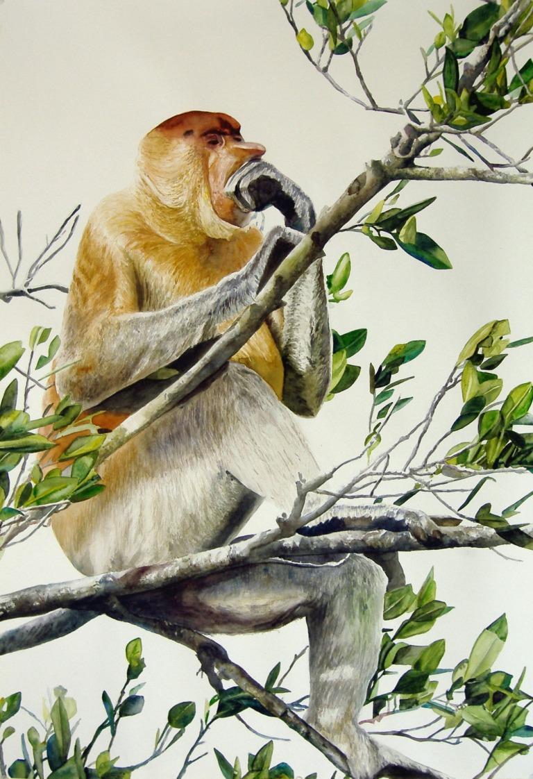 """To ape :  Orang Belanda = Dutchman"""